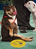 2018 American Rescue Dog Show
