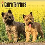 Cairn Terriers 2018 12 x 12 Inch Monthly Square Wall Calendar, Animals Dog Breeds Terriers (Multilingual Edition)