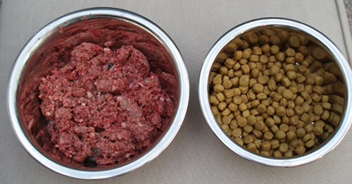 What is the Raw Food Diet for Dogs